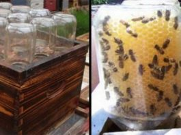 Homemade Beehive